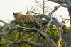 Leopard Kirkman_14-03-16__O6B2598