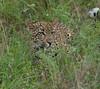 Leopard Kirkman_14-03-15__O6B2207