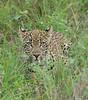 Leopard Kirkman_14-03-15__O6B2209