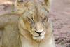 Lions Kirkman_14-03-16__O6B2332