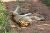 Lions Kirkman_14-03-16__O6B2338