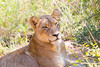 Lion Kirkman_14-03-16__O6B2354
