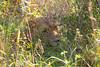 Lions Kirkman_14-03-15__O6B2326