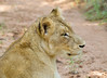 Lions Kirkman_14-03-16__O6B2343