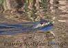 untitled20110129_RiverOtter La-1184605871-O