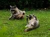 Racoons Tambor_09-11-07_7I2B19-786420066-O