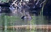riverr otters (1)-529696801-O