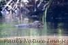 riverr otters (2)-529696826-O
