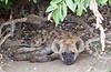 Hyena Kruger_14-03-02__O6B0384