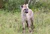 Hyena Ngala_14-03-20__O6B3418