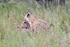 Hyena Ngala_14-03-19__O6B3290