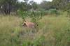 Hyena Ngala_14-03-19_IMG_6945