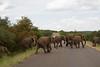 Elephants Kruger_14-03-01_IMG_6145