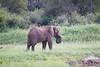 Elephant Livinstone_14-03-06__O6B0937