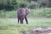 Elephant Livinstone_14-03-06__O6B0944