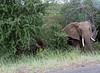 Elephants Kruger_14-03-01_IMG_6133