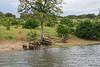 Scenery Chobe_14-03-07_IMG_6548