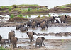 Elephants Kruger_14-03-02__O6B0431
