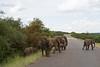 Elephants Kruger_14-03-01_IMG_6142