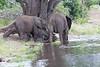 Elephant Chobe_14-03-08__O6B1300