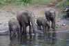 Elephants Chobe_14-03-08__O6B1242