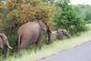 Elephants Kruger_14-03-01_IMG_6155