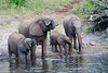 Elephants Chobe_14-03-08__O6B1238