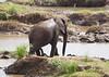Elephants Kruger_14-03-02__O6B0536