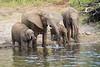 Elephants Chobe_14-03-08__O6B1237