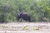 Elephants RdBotswana_14-03-06__O6B0805