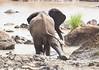 Elephants Kruger_14-03-02__O6B0534