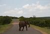 Elephants Kruger_14-03-01_IMG_6150