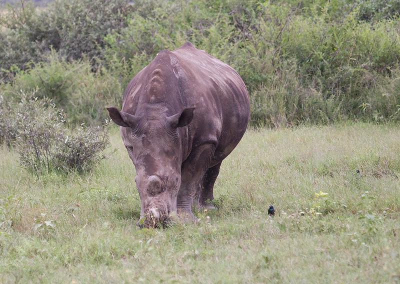 BlackRhino Khama_14-03-13__O6B1923