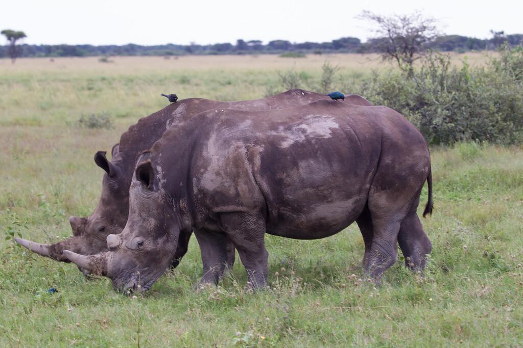 BlackRhino Khama_14-03-13__O6B1905