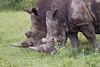BlackRhino Khama_14-03-13__O6B1911