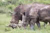 BlackRhino Khama_14-03-13__O6B1915