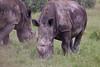 BlackRhino Khama_14-03-13__O6B1900