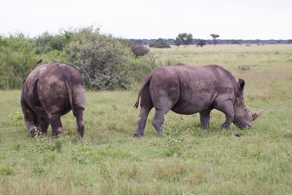 BlackRhino Khama_14-03-13__O6B1894