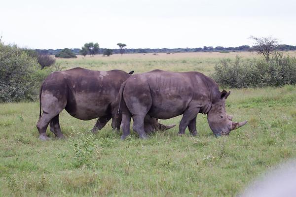 BlackRhino Khama_14-03-13__O6B1899
