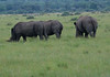 Rhino Khama_14-03-13-0006