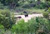 Bufalo Kruger_14-03-01__O6B0221