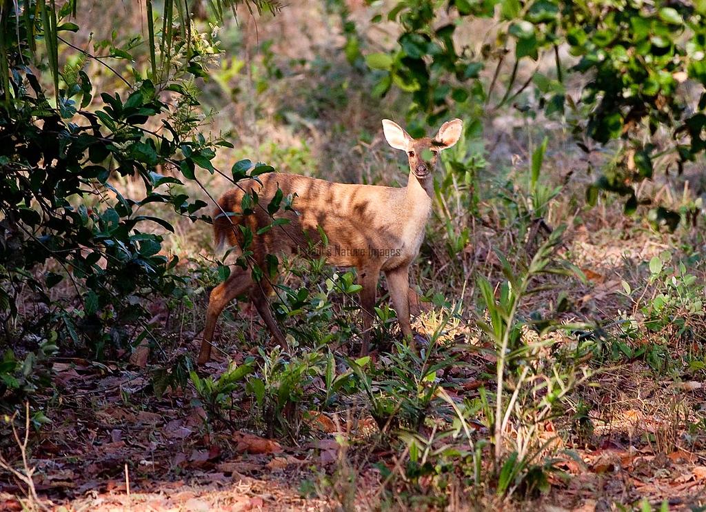 Marsh Deer Pant_06-08-14_0013_-545398440-O