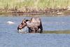 Moose (108)-557318027-O