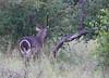WaterBuck Kruger_14-03-02__O6B0658