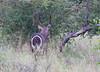 WaterBuck Kruger_14-03-02__O6B0657