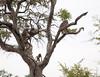 Baboon Kruger_14-03-02__O6B0292