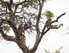 Baboon Kruger_14-03-02__O6B0290