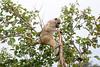 Baboon Chobe_14-03-08__O6B1579