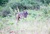 Baboon Chobe_14-03-08__O6B1407