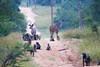 baboonKudu Kirkman_14-03-18__O6B3022